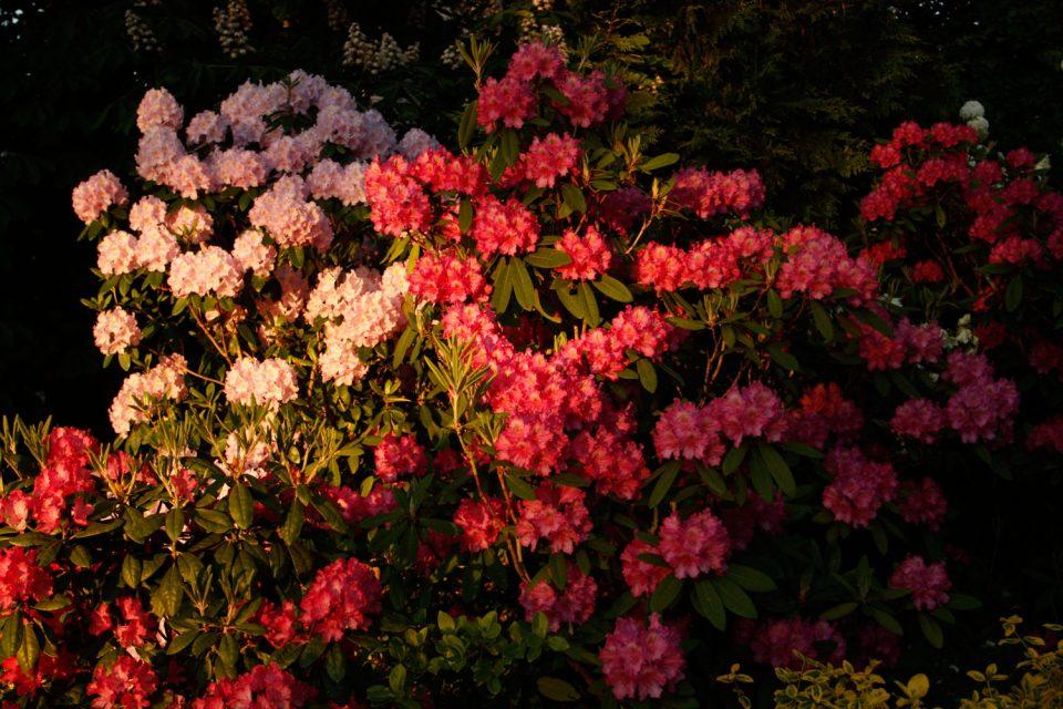 Blomidon Inn Gardens Wolfville Blomidon Inn Nova Scotia